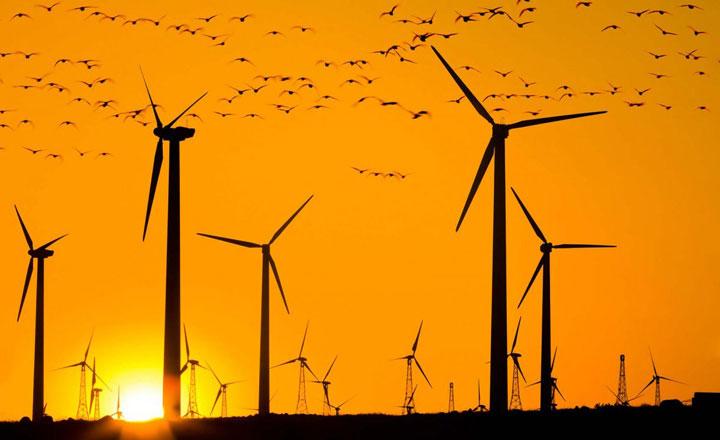 птицы и ветрогенераторы защита