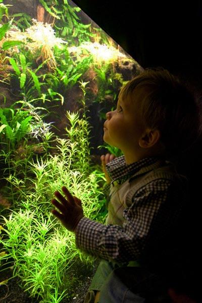 время освещения для разных аквариумов