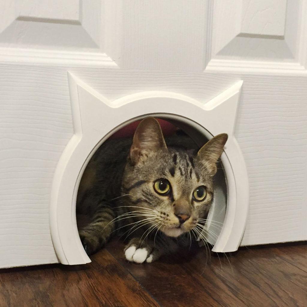 лаз для кошки в двери